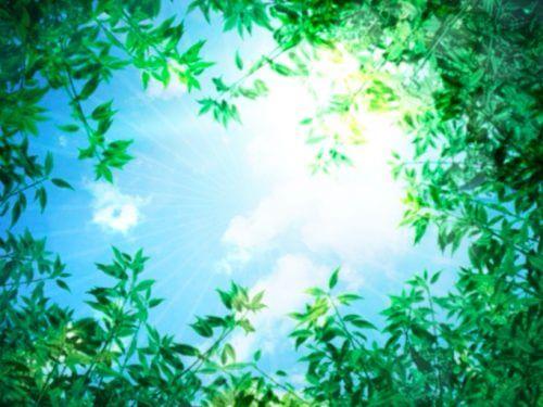 森林から太陽光を浴びる