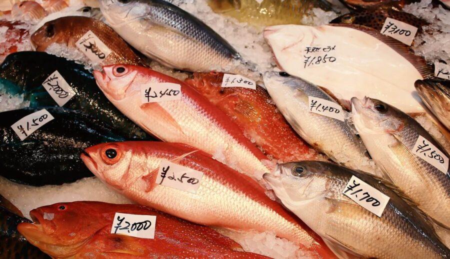 魚は体に良い