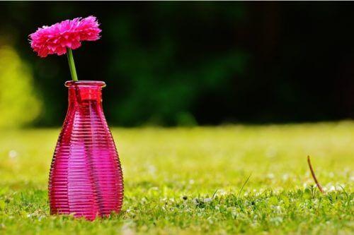 おしゃピクにおすすめの花と過敏