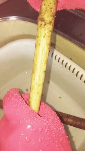 ダイソーのpeelerGlove(ピーラーグローブ)でゴボウを洗うと綺麗になった