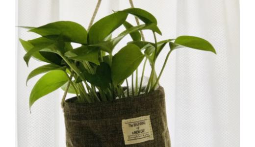 【購入品】ダイソーの330円観葉植物でポトスを買ってみた。吊り下げ鉢と合わせたとっても可愛くなった♪